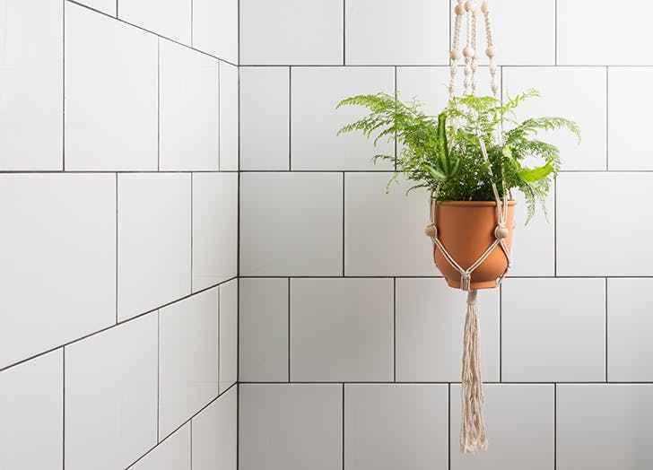 banyo bitkisi